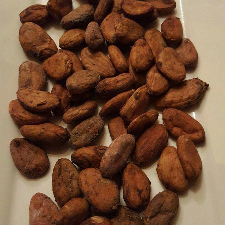 Probando granos de Cacao Carenero Superior, seleccionando pequeñas muestras para su tostado, descascarillado...y por supuesto licor de Cacao...que orgullo trabajar con esta maravilla de producto....amamos el Cacao Venezolano. #venezuela #cacao #carenero #chocolateoscuro #calidad