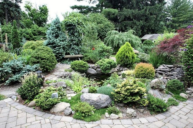 dwarf conifers shrubs zone 7 | dwarf conifer garden in Dewitt, NY