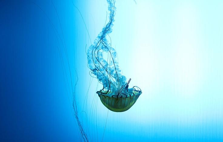 Aquarium du Québec - Plongez dans la mer, à Québec.   Forfait disponible à l'Hôtel Sépia. L'Hôtel le plus près de l'aquarium :)