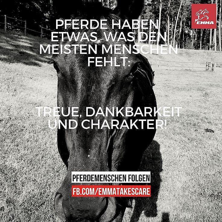 Pferde haben etwas, was den meisten Menschen fehlt