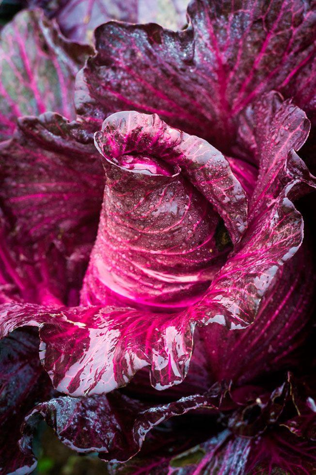 Food Photography Award: Das sind die besten Food-Fotos des Jahres - S.12 - Fotografie | STERN.DE