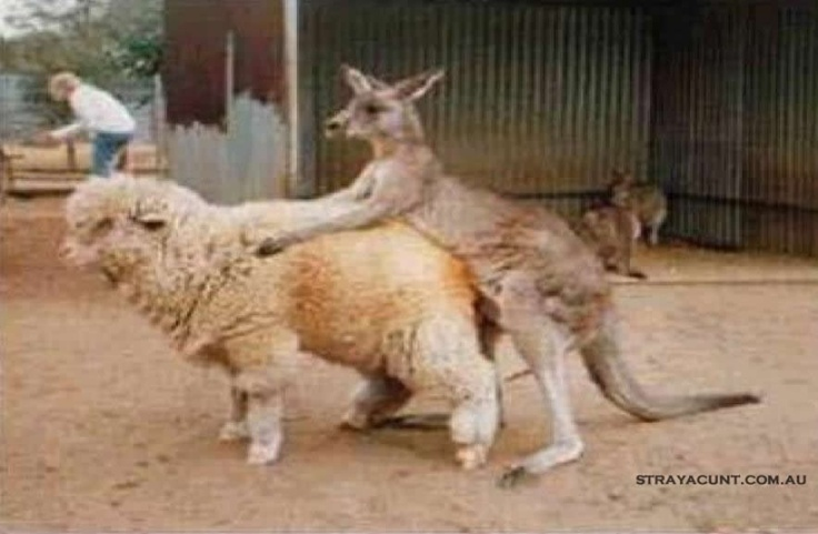 Australia fucking with New Zealand  #strayacunt #straya #aus #nz