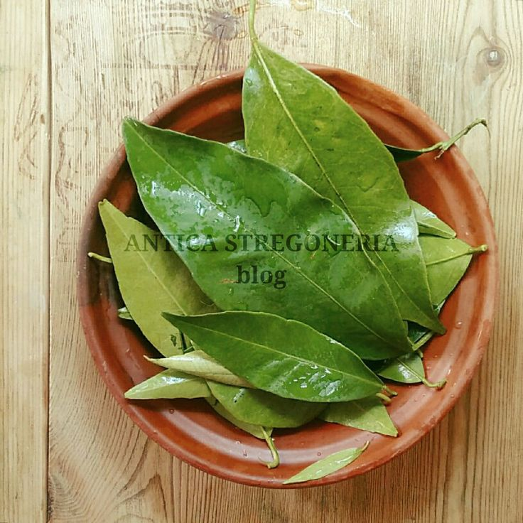 #anticastregoneria  #foglie #leaf #verde #green #bruja #bruxa #streghe #materiamedica #herbalism #bio #natura #nature #wood #wet