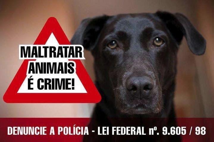 Bota para girar!, por Fernanda Cubiaco: Manual orienta cidadão de como proteger os animais...
