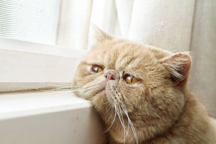 Cats 'are stressed because we treat them like dogs' 2