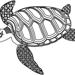 Sea Turtle Mozaic Green Coloring Page
