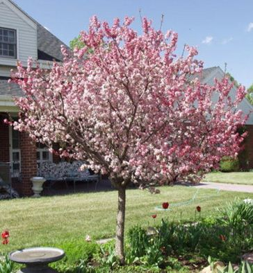 Best 25 tree with white flowers ideas on pinterest for Ornamental trees for flower beds