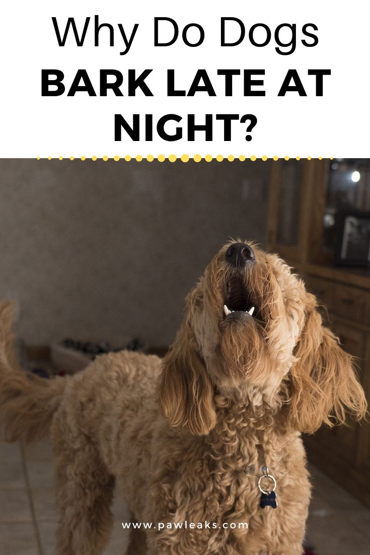 Why do dogs bark at night in 2020 dog barking at night