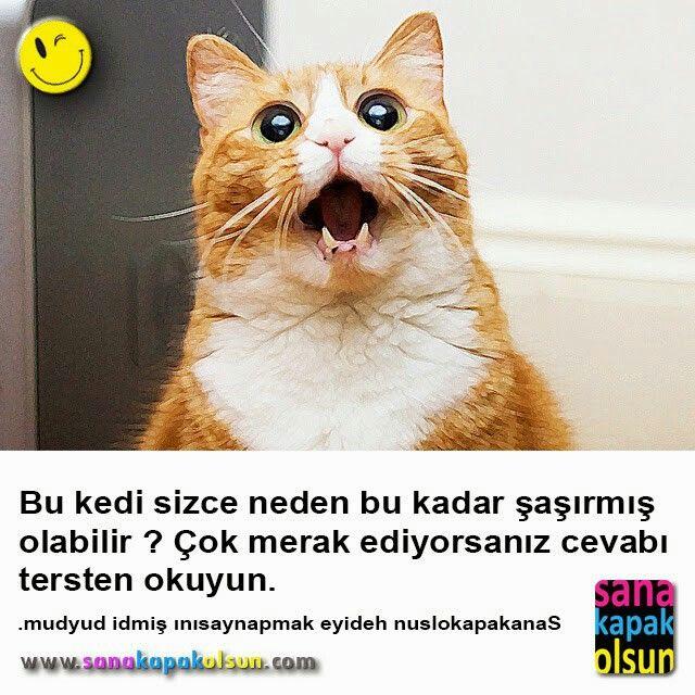 Herkese afiyet olsun :) ama bu kedi ciğere bakmıyor bilesiniz :) #sanakapakolsun www.sanakapakolsun.com