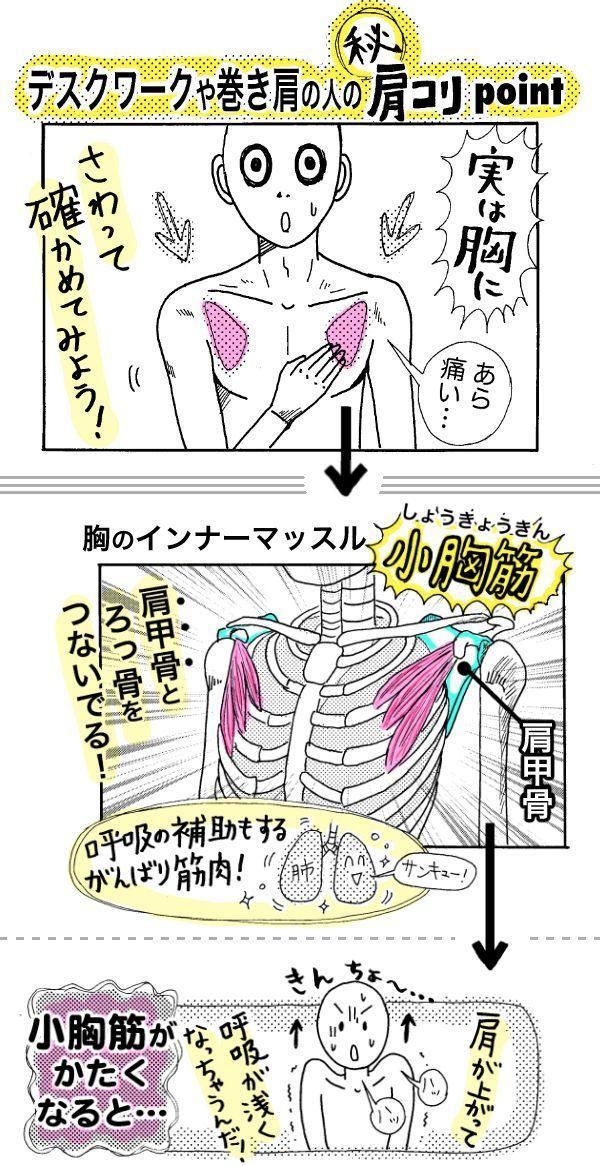 スマホやデスクワークでの巻き肩姿勢で「肩コリ」を訴える現代人に朗報!体の後ろ側ではなく「胸の筋肉」をほぐすと、肩コリ改善&呼吸もラクになるリフレッシュ効果が!「肩コリなのに、胸の筋肉って…」と思って...