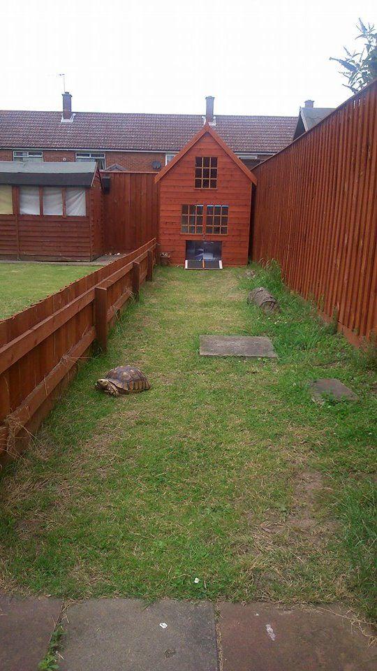 Garden shed and long run. Sulcata enclosure.