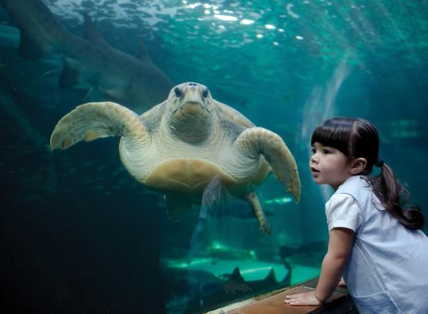 Every kid loves a trip to the aquarium - saving this pin for our next holiday in Cape Town