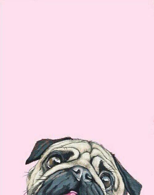 Pug                                                       …