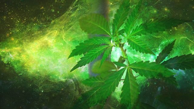 Are you a Marijuana connoisseur and are on the lookout for most expensive weed strains? Buy Weed Online tells which one to choose.