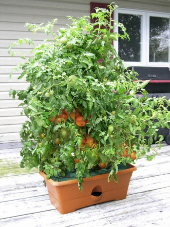 21 best GrowBox Gardening images on Pinterest Weed Planters and