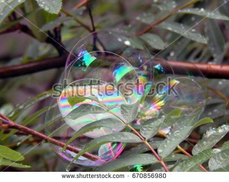 Soap bubbles on the branches of a tree close up