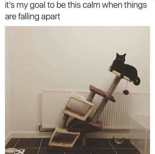CatsTextPosts