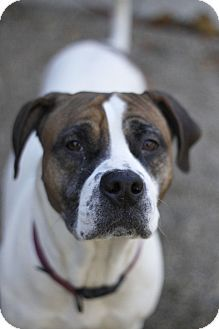 Almost Home Dog Rescue Lafayette In