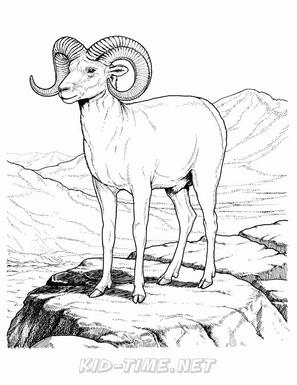 Ram Animal Kids Coloring Pages Coloring Pages For Kids Coloring Pages For Kids Animal Coloring Books Coloring Pages Coloring Books