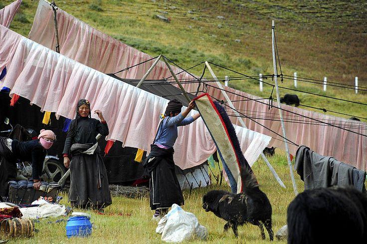 "Drokpa ""Nomad"", Tibet 2013"