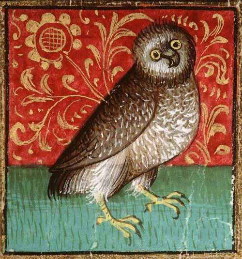Curious owl. Bartholomeus Anglicus, 'Livre des propriétés des choses' ('De proprietatibus rerum', French translation of Jean Corbechon), Paris 1447 Amiens, Bibliothèque municipale.: