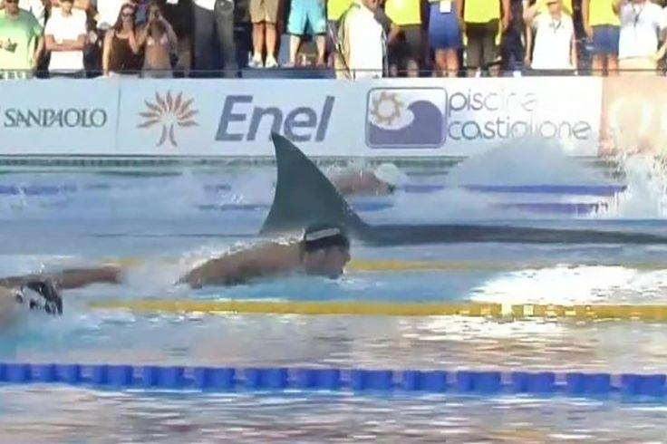 Michael Phelps corrió un gran tiburón blanco y vivió para contarlo