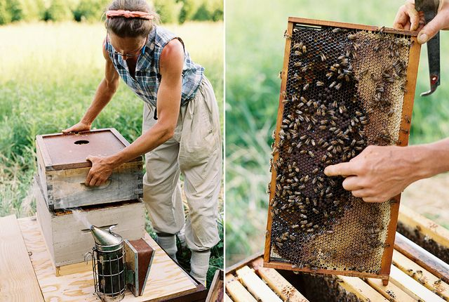 KAREN WISEBees Hives, Dreams Job, Mary Woltz, Gardens, Business Bees, Bees Keeper, Bees Beautiful, Beekeeping, Honey Bees