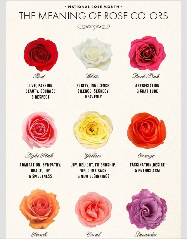 The meaning of rose colors gardening trusper tip for Meaning of flower colors