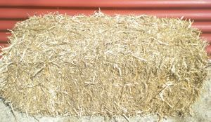 Pea Straw in stock