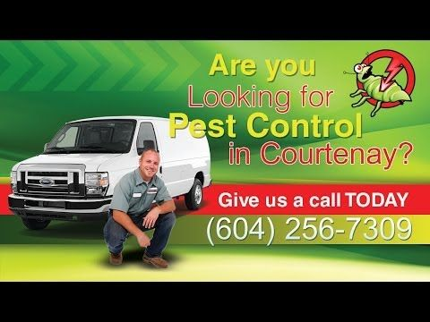 Pest Control Courtenay, 24 Hour Pest Control Courtenay, Emergency Pest Control Courtenay --> http://www.youtube.com/watch?v=6TFFDvIUOz4