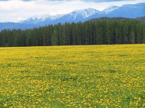 Spring in Whitefish, Montana