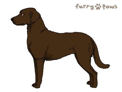 Furry Paws // WCT Kip's Yukon [Ll 2STM 9HH 4hh 1.337] 10.1 #10 #12 #13 #14 *BoB*'s Kennel