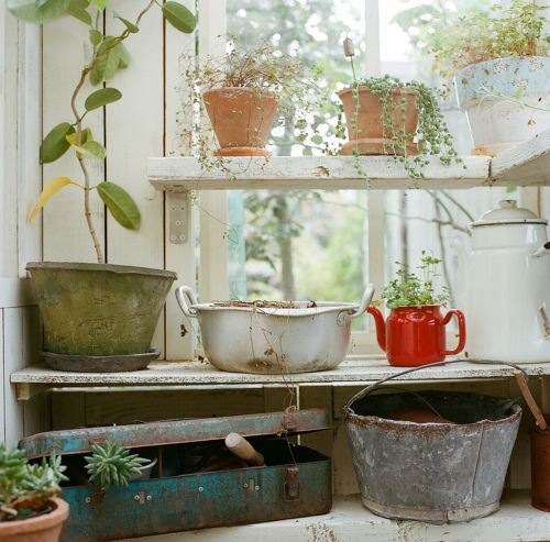 plants in pots in a sunroom