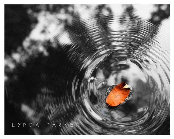 Orange Leaf Selective Colour Black and White Giclee Photograph - 8x10 on Etsy, $45.00 CAD