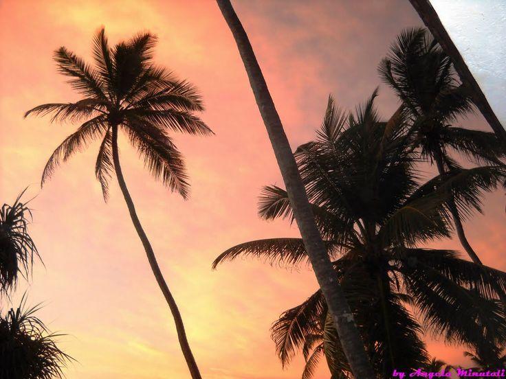 SRI LANKA - Tramonto tra le palme del cocco reale - Dikwela vilege -
