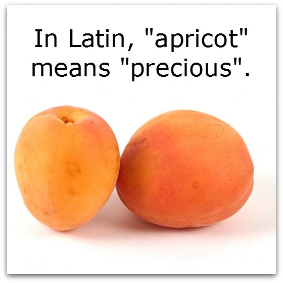 We have delicious Apricot Freesia products just for you. http://eclecticlady.com/data/fragrances.php?f=fragrances-atoz.txt&s=apricotfreesia