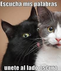 Resultado de imagen de gatos graciosos
