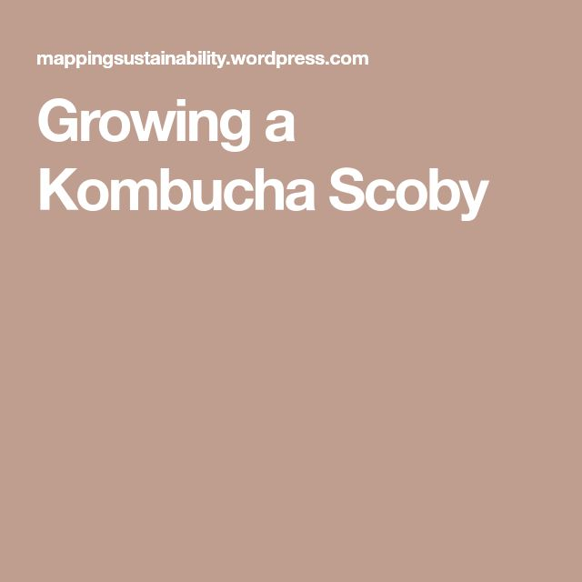 Growing a Kombucha Scoby