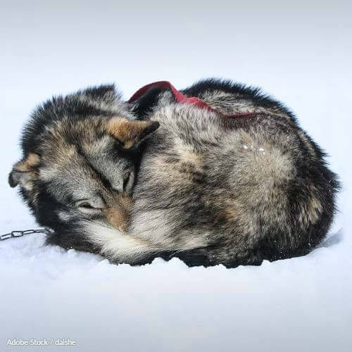 Please sign and share.  Each year, the Iditarod race drives sled dogs to gruesome deaths. Help reform Alaska;s animal cruelty laws!