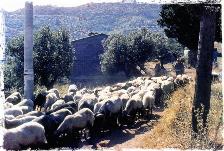 Scarlino (Grosseto). Maremma Toscana. 1981.