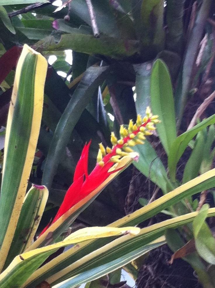 19 best images about jard n bot nico orquideas bromelias - Plantas que aguantan temperaturas extremas ...