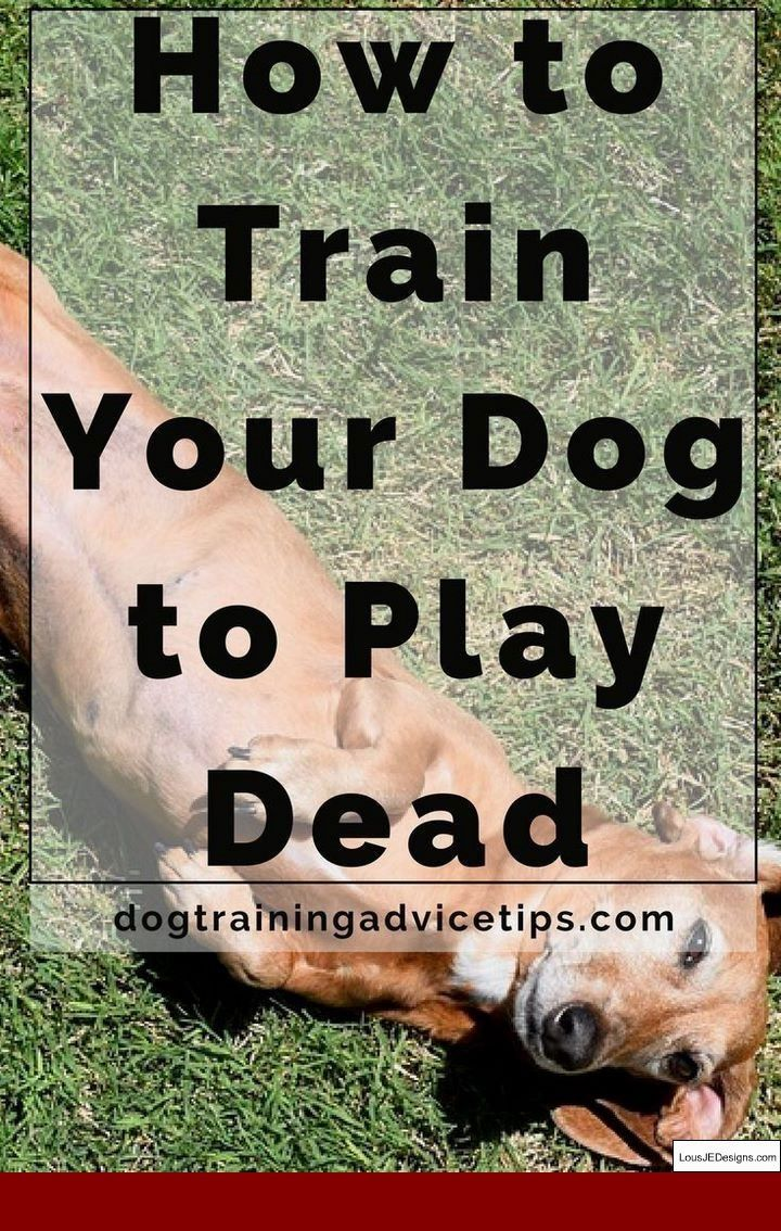 How To Train Your Dog Not To Run Into You And Pics Of How To Train