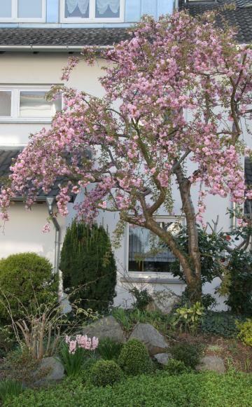 die besten 25 bloombux ideen auf pinterest rosa b ume. Black Bedroom Furniture Sets. Home Design Ideas