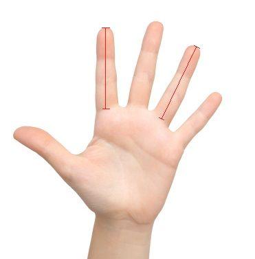 Perbandingan Panjang Telunjuk dengan Jari Manis (Dok. GATRA) Jakarta, GATRANews - Hanya dengan membandingkan indeks dan jari manis Anda, ahli syaraf (...