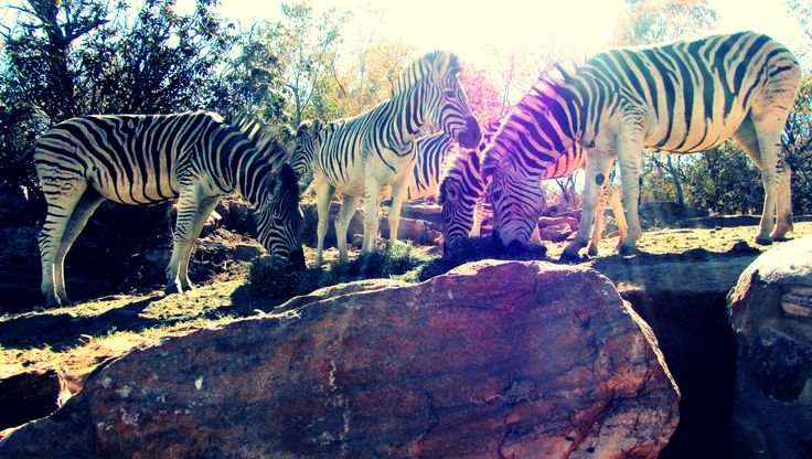 Wildlife: Limpopo South Africa