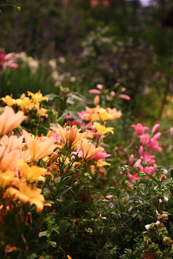775 Best Au Jardin Images On Pinterest Agriculture Amazing  # Palette Jardin De Givre
