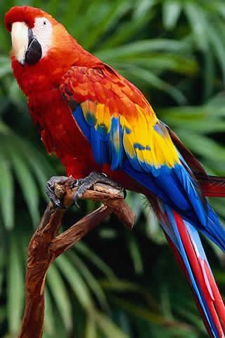 Scarlet Macaw! My favorite tropical bird!