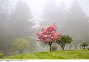 Fog - Oregon