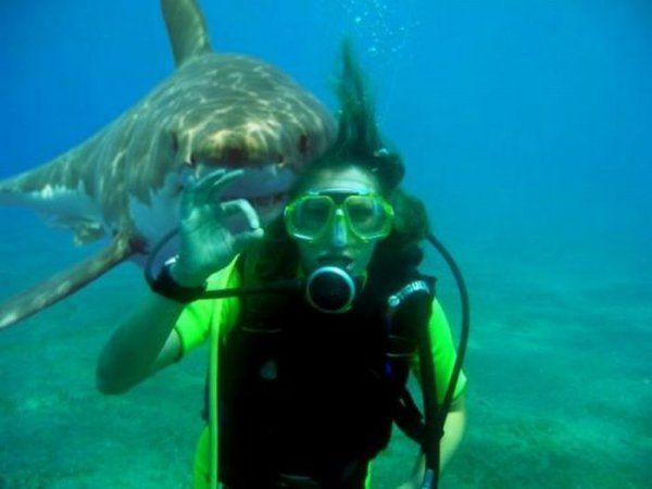 Shark Photobomb...    9 times out of 10 a shark photobomb is followed by a shark attack.