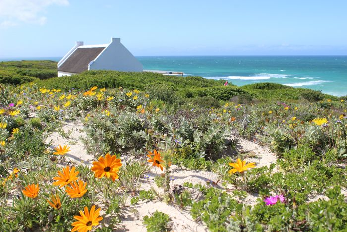 Spring flowers at De Hoop Nature Reserve